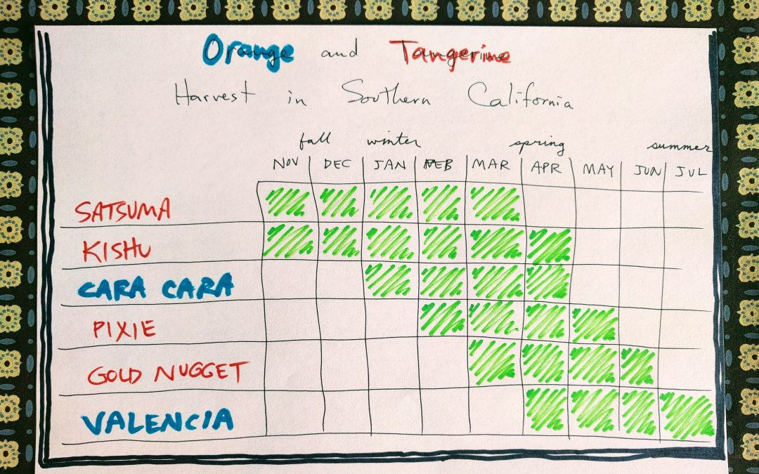 Orange and tangerine harvest chart Southern California
