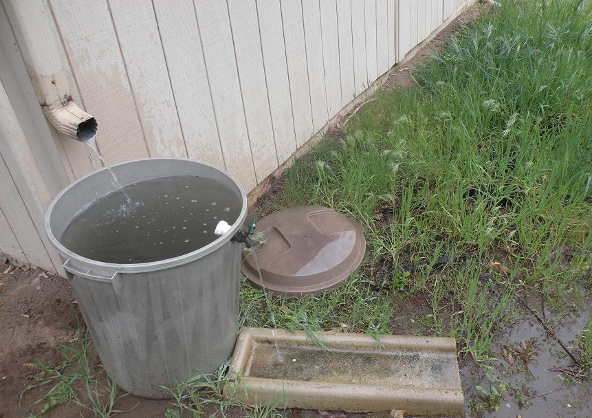 trashcan collect rain