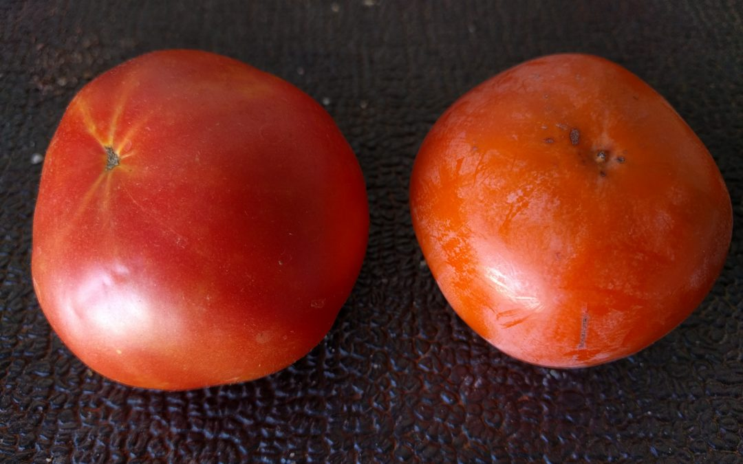 Persimmon vs. tomato