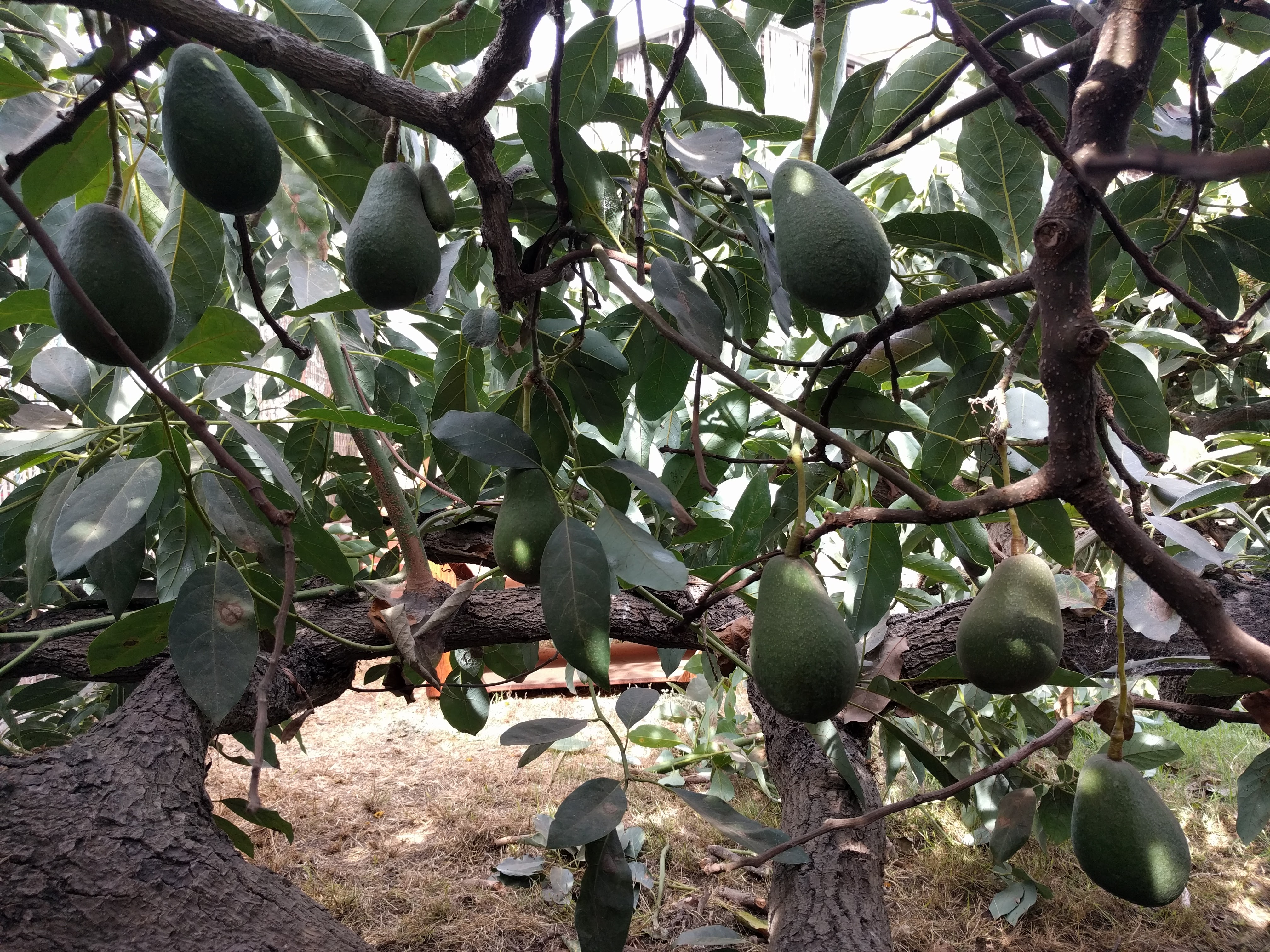 100 fruit trees for small spaces white transparent yellow