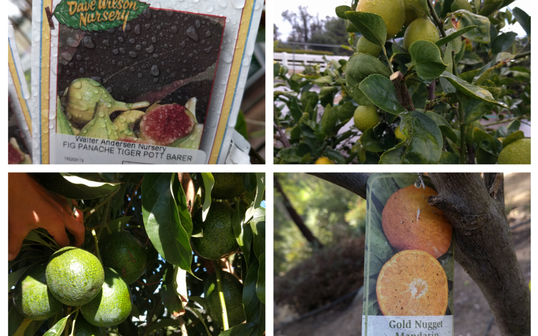 What kind of fruit tree should you plant?