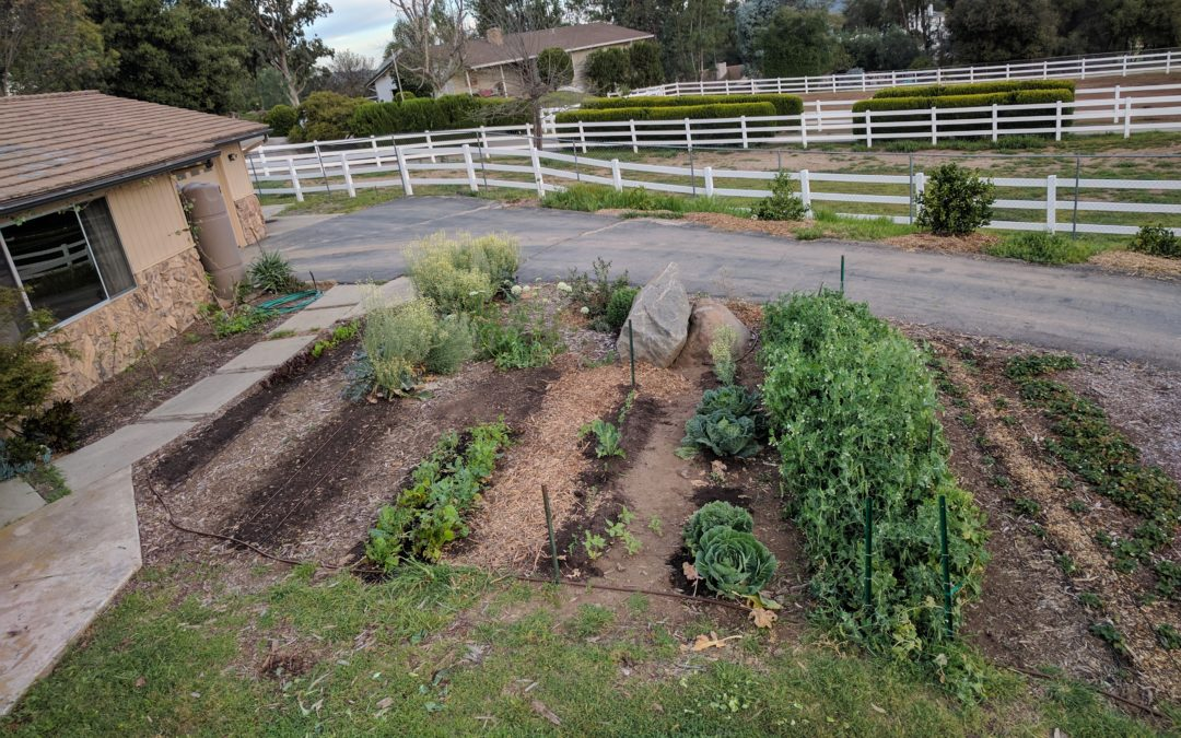 Where to plant a vegetable garden