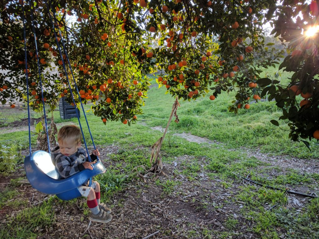 swing in orange tree