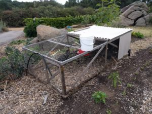 small mobile chicken pen