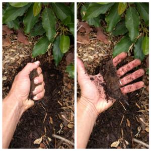 soil moisture feel test Pinkerton avocado