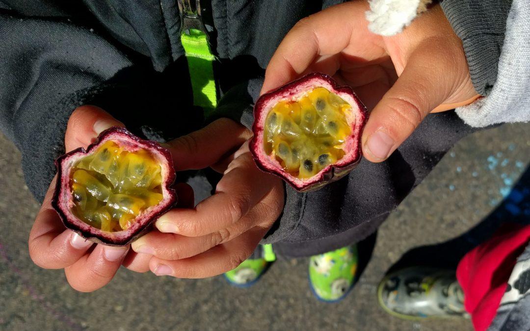 passion fruit cut in half