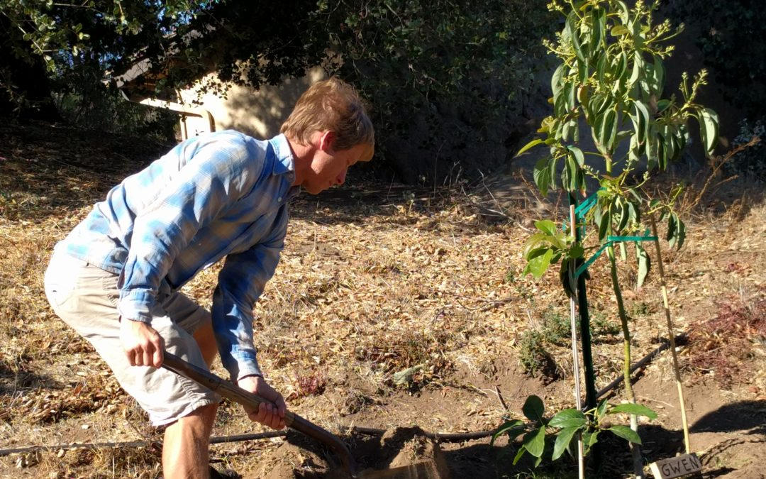 Planting Reeve's placenta tree