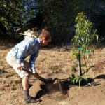 planting placenta by tree