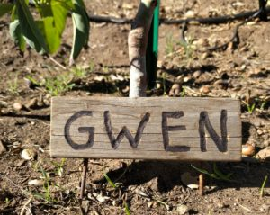 Gwen placard for tree