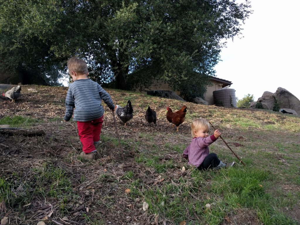 chicken herders