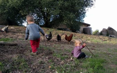chicken herders