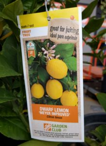 Meyer Lemon tree tag Home Depot