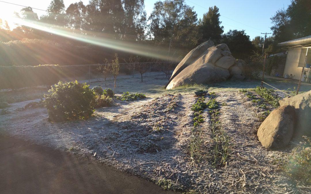 frosty yard Southern California