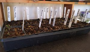 module tray vegetable seeds sown indoors