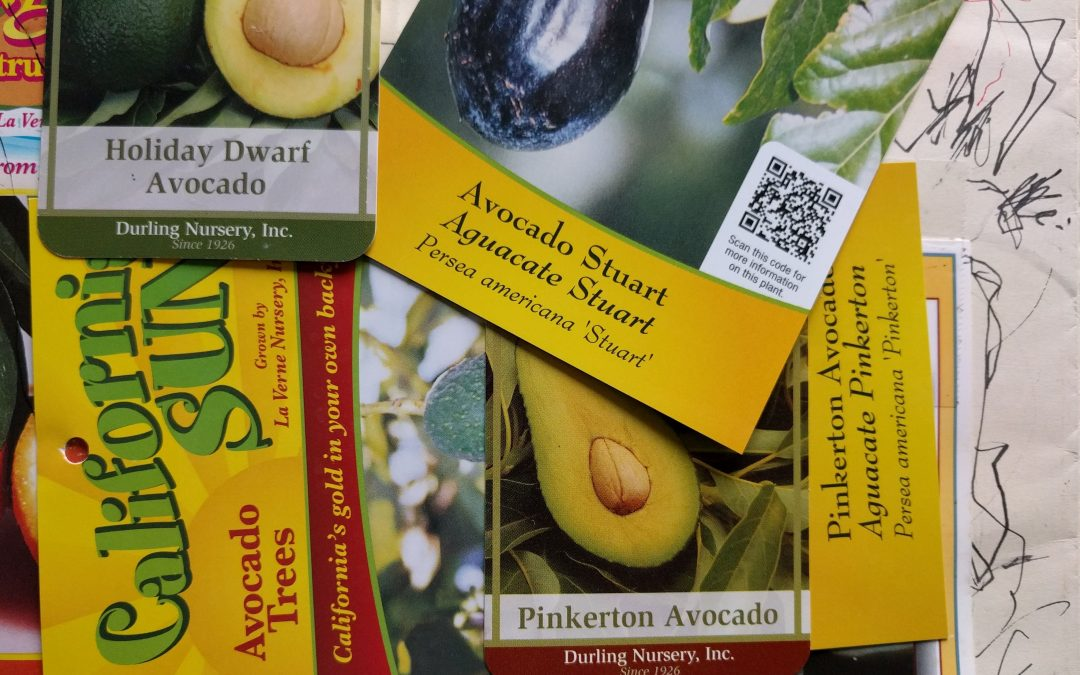 What's the best kind of avocado to grow?