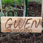 Tree sign for Gwen avocado