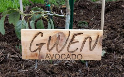 Custom signs for fruit trees