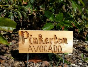 Tree sign for pinkerton avocado