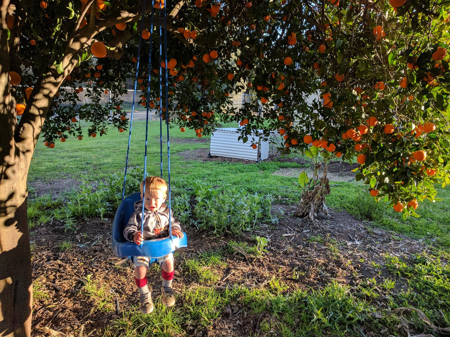 Growing fruit trees in Southern California - Greg Alder's ...