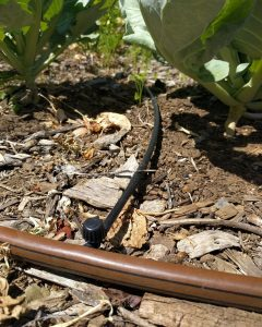 inline shut-off valve on drip line for vegetables