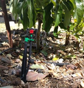 inline shut-off valve on micro-sprinkler for fruit tree