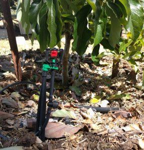 inline shut-off valve on micro-sprinkler for fruit tree