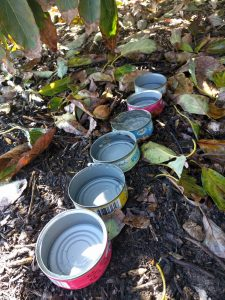 tuna cans measuring micro-sprinkler output under fruit tree