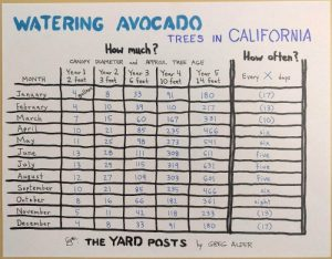 Watering avocado trees in California table showing how much and how often