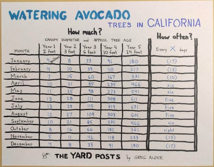 Watering Avocado Trees In California Table Showing How Much And Often