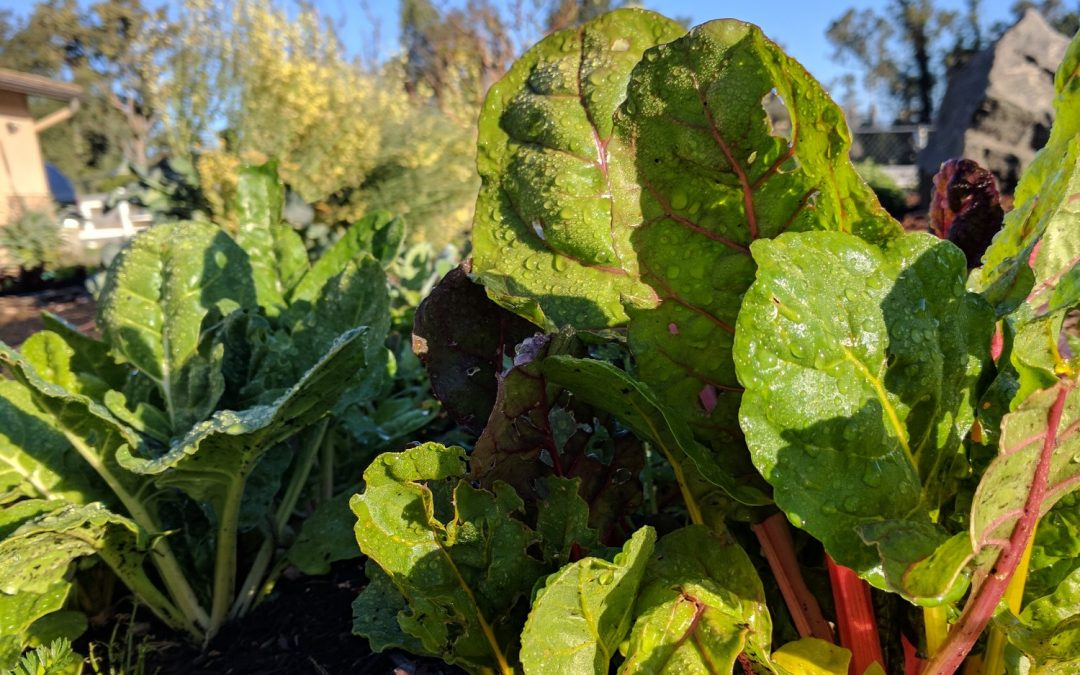 Starting a vegetable garden in Southern California
