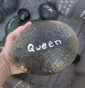 Queen avocado