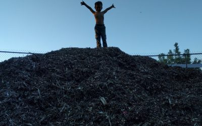 Where to get wood chips for mulch