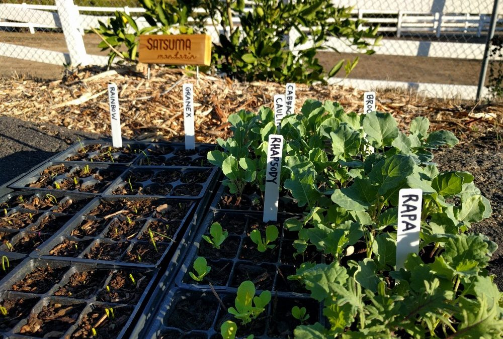 Which vegetables can I plant now in Southern California?