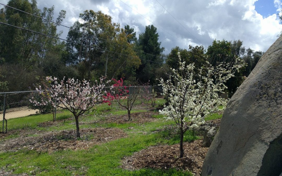 Messages from your deciduous fruit trees after the chilly winter