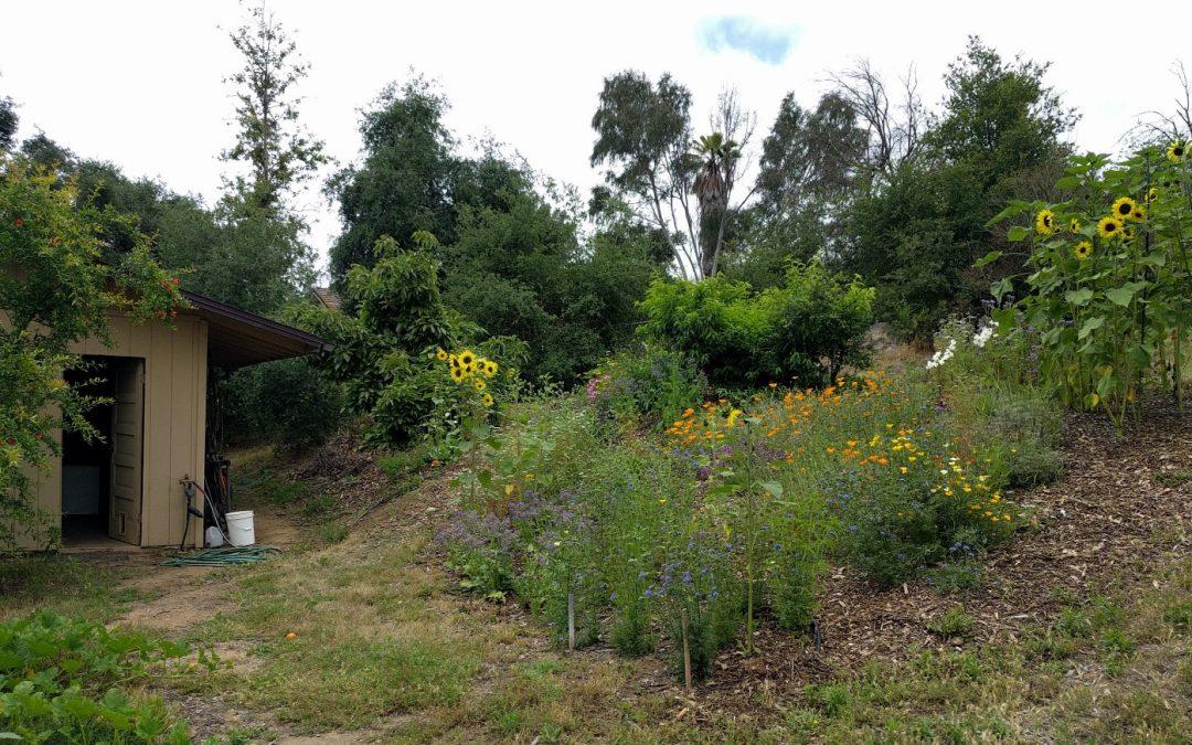 Growing a Bee Garden