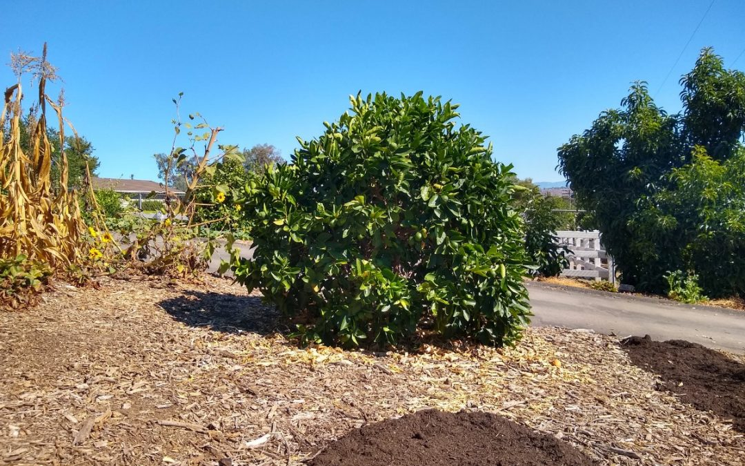 Unirrigated fruits and vegetables in Southern California, summer 2019