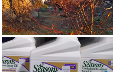 Dormant spray deciduous fruit trees?