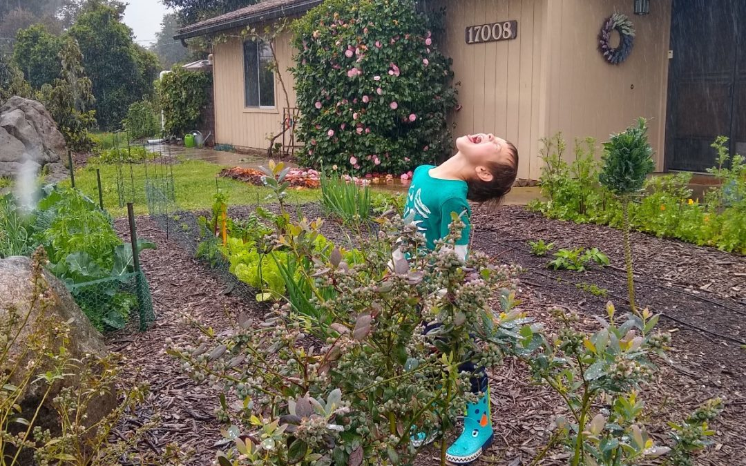 Effects of the cool, wet spring on our Southern California gardens