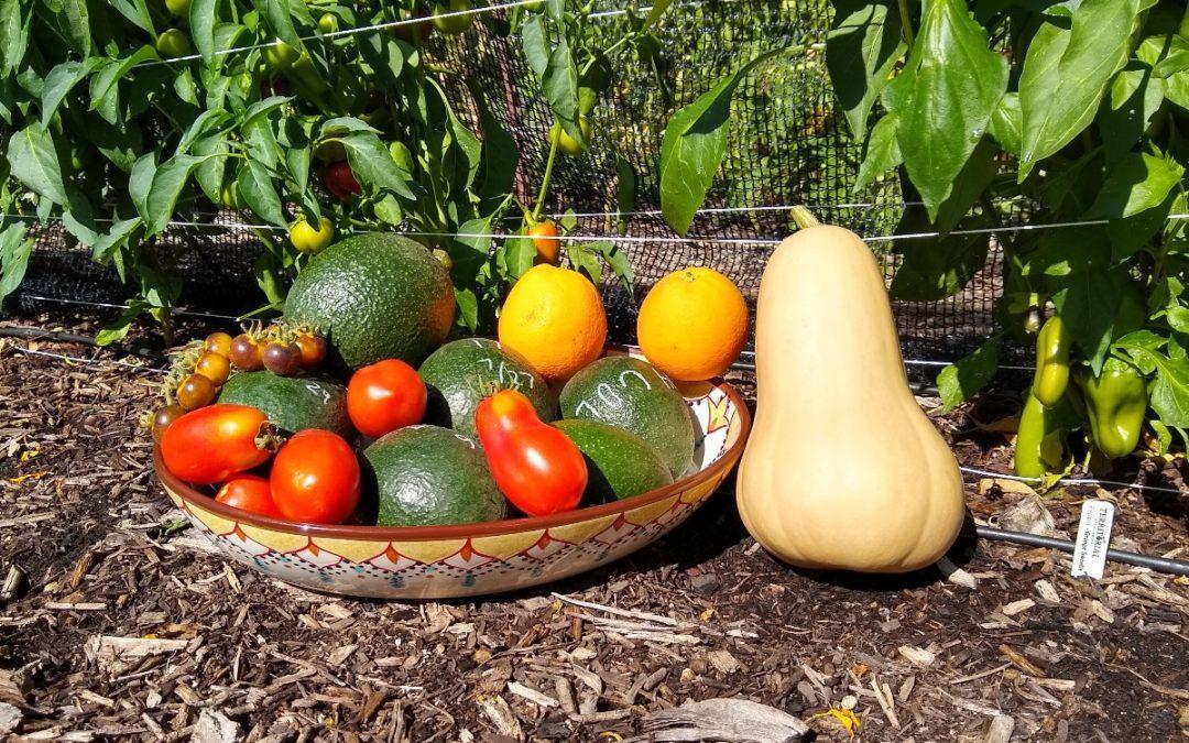 A Midsummer Garden's Harvest