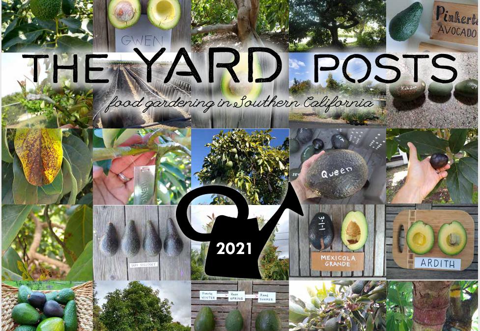 Avocado calendar for 2021