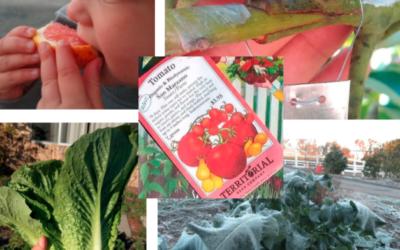 Winter opportunities in the food garden