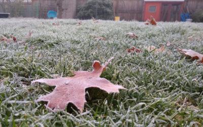 January gardening: Oregon vs Southern California