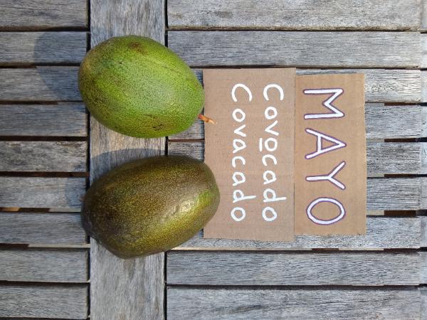Mayo / Covocado avocado: a profile