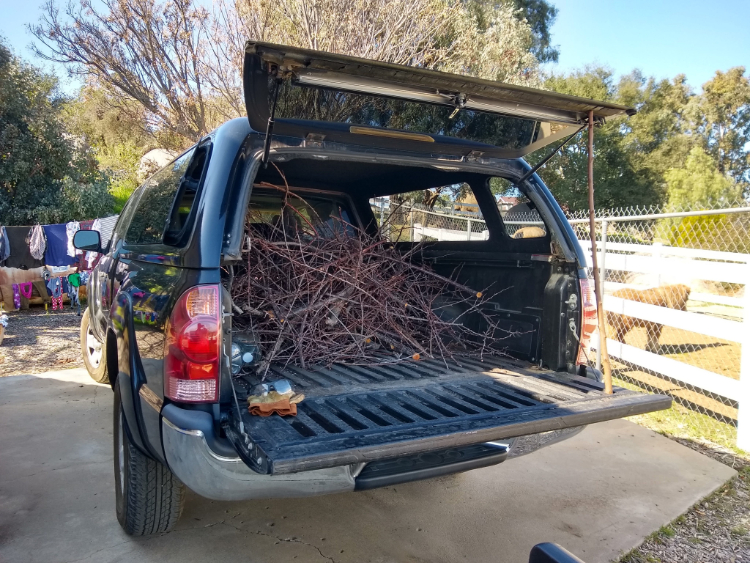 What to do with fruit tree prunings?