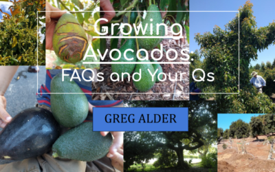 Online presentation: Growing avocados – FAQs and Your Qs