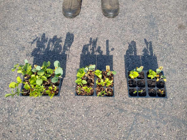 Experiment: comparing composts for vegetable seed starting
