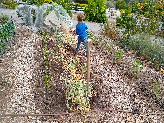 Harvesting fruits and vegetables skillfully